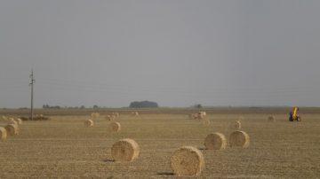 Jesen u Vojvodini seno